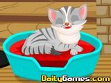 Kitty Cat Winter Care