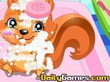 Princess Squirrel Care