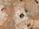 Smash the Bugs X